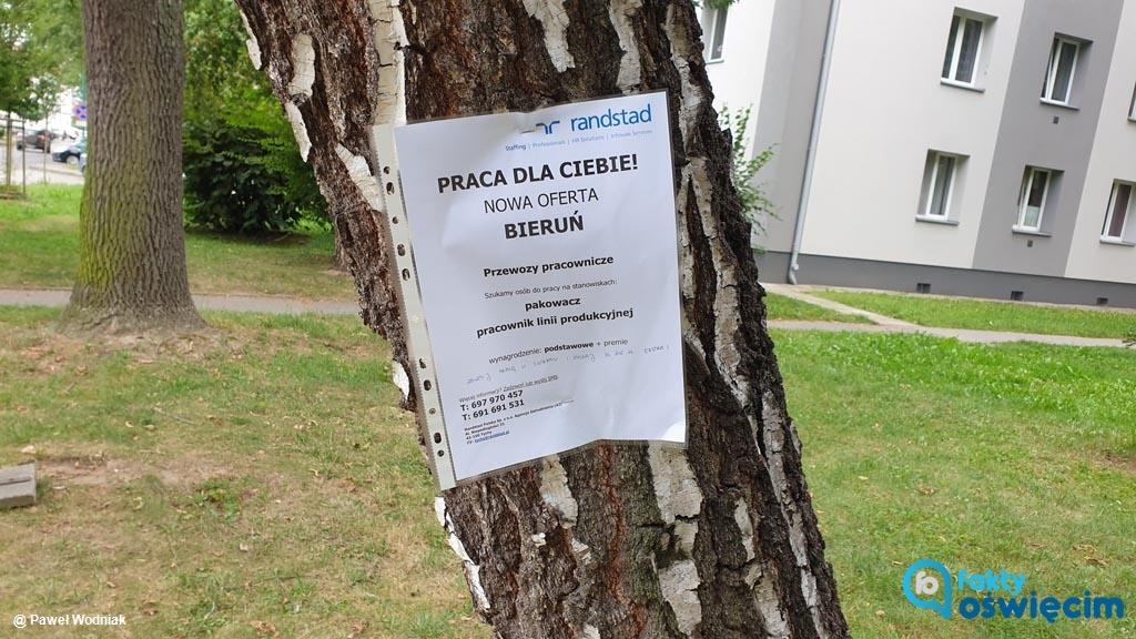 W wielu punktach Oświęcimia pojawiły się ogłoszenia o pracę. Nie zawisły jednak na tablicach ogłoszeń, których w mieście nie brakuje, ale na drzewach.