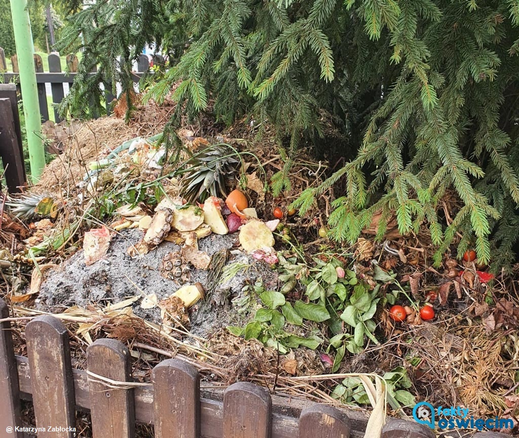 W czwartek rozpoczną się kontrole przydomowych kompostowników na prywatnych posesjach w Oświęcimiu. Zajmie się nimi straż miejska.