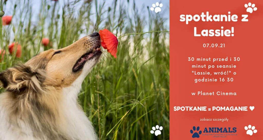 Historia Lessi, najwierniejszego psa świata gromadzi w kinach tłumy. Przychodząc do Planet Cinema na ten film można pomóc bezdomnym zwierzętom.