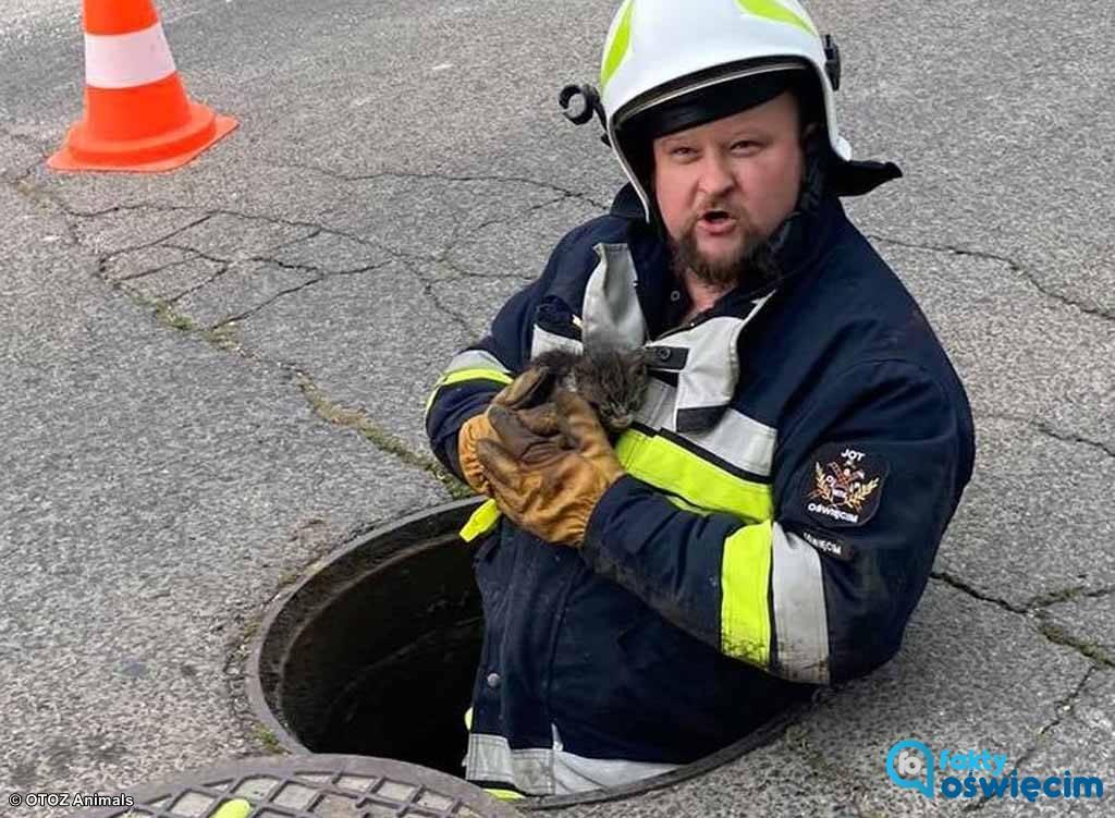 Miauczenie usłyszały dwie kobiety. Po chwili rozpoczęła się akcja ratunkowa. Kociak, który wpadł do kanalizacji deszczowej jest cały i zdrowy.